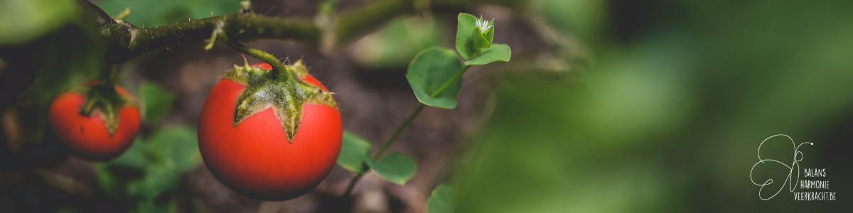 Effecten van persoonlijke groei - vruchten plukken